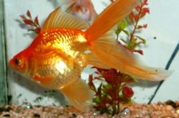 acvaristica pesti exotici